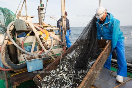 定置網漁の男性の素材 [FYI01030686]