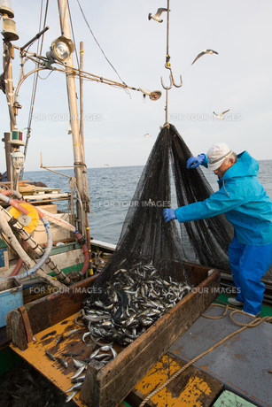 定置網漁の男性の素材 [FYI01030699]