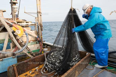 定置網漁の男性の素材 [FYI01030701]