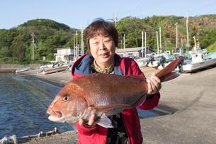 漁港で魚を持つ女将の素材 [FYI01030769]