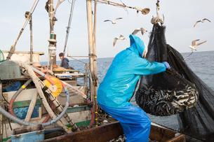定置網漁の男性の素材 [FYI01030786]