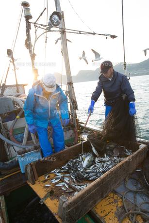 定置網漁の男性の素材 [FYI01030797]