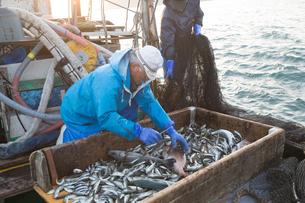 定置網漁の男性の素材 [FYI01030809]