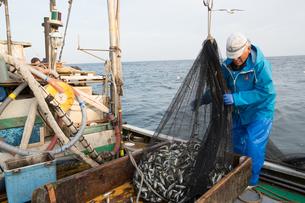 定置網漁の男性の素材 [FYI01030811]