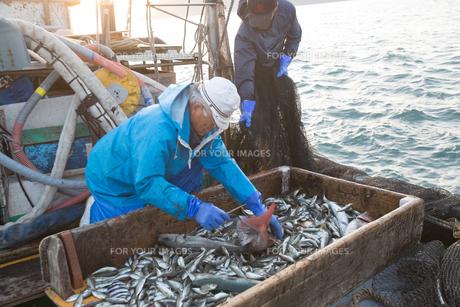 定置網漁の男性の素材 [FYI01030863]