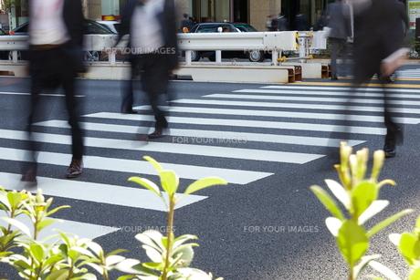 横断歩道を歩く人たちの素材 [FYI01034233]