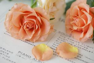 オレンジ色のバラの素材 [FYI01037362]