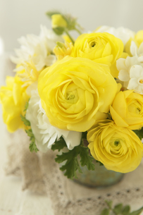 黄色のランキュラスの素材 [FYI01037671]