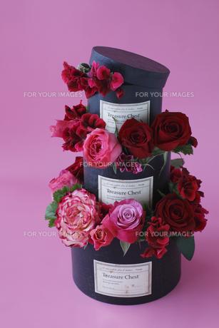 赤、ピンクのバラと赤いゼラニウムの黒いボックスの3段アレンジの素材 [FYI01038081]