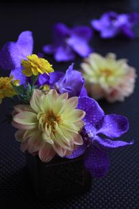 黒いクロス布の上の花の素材 [FYI01038466]