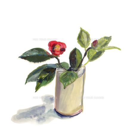 花瓶に活けた椿の素材 [FYI01040552]