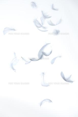 宙を舞う羽の素材 [FYI01042923]