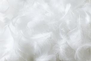 羽毛の素材 [FYI01043160]