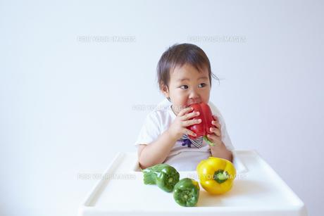ベビーチェアーに座って赤いパプリカを食べる幼児の素材 [FYI01044104]