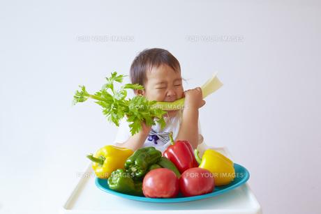 野菜の前に座りセロリをかじる幼児の素材 [FYI01044322]