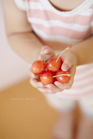 さくらんぼを両手で抱える子供の手の素材 [FYI01044372]