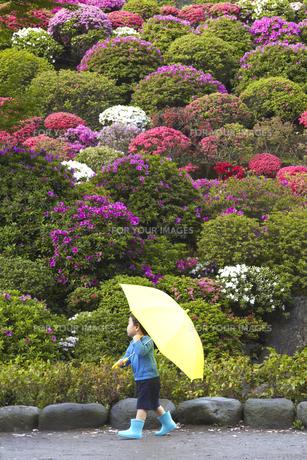 黄色い傘と水色の長靴を履いて走る子供の素材 [FYI01044377]