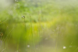池の草とトンボの素材 [FYI01051989]