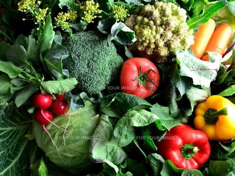 グリーン系野菜と緑黄色野菜の写真素材 [FYI01052168]