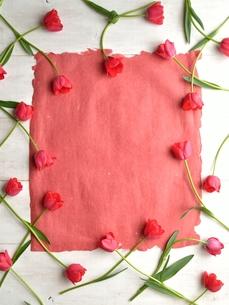 赤いチューリップと赤色の紙の写真素材 [FYI01052224]