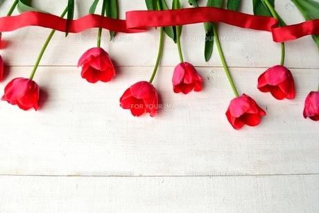 赤いチューリップとリボン 白木材背景の写真素材 [FYI01052242]