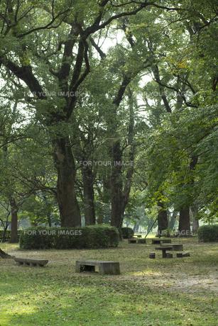 公園のベンチの素材 [FYI01053284]