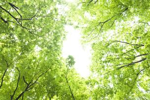 新緑のケヤキ並木の素材 [FYI01058599]