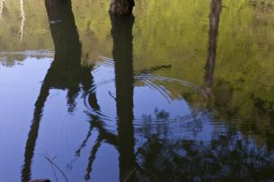 自然湖の湖面の波紋と青空の素材 [FYI01060130]