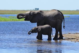水辺の象の親子の素材 [FYI01061323]