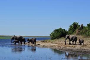 水辺の象の群れの素材 [FYI01061339]