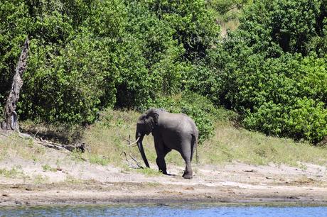 水辺の象の素材 [FYI01061342]