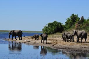 水辺の象の群れの素材 [FYI01061352]