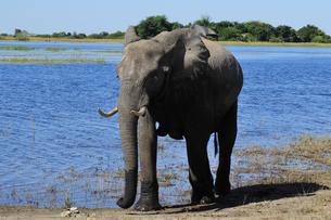 水辺の象の素材 [FYI01061353]