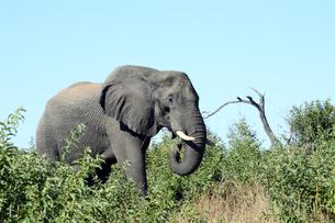 象の素材 [FYI01061502]