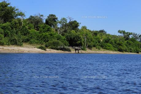 チョベ川のリバークルーズで見る象の素材 [FYI01061735]