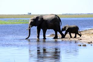水辺の象の親子の素材 [FYI01061908]