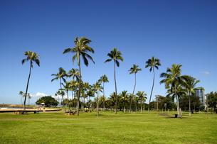 アラモアナビーチパークのヤシの木の素材 [FYI01064416]