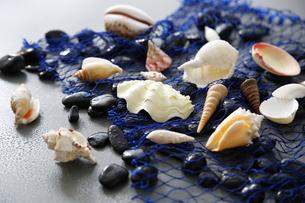 貝のイメージの素材 [FYI01065718]