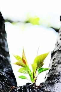 新緑の素材 [FYI01066571]