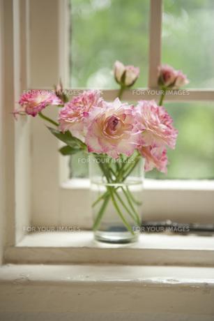 花の素材 [FYI01067754]