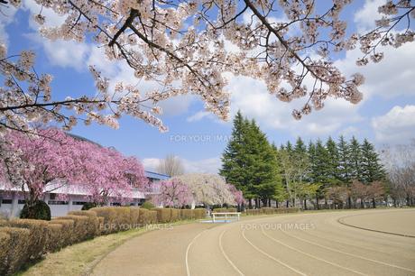 桜咲く水沢公園の素材 [FYI01072797]