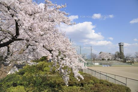桜咲く水沢公園の素材 [FYI01072817]