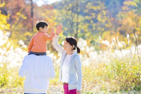 秋のすすき野原で遊ぶ親子の素材 [FYI01074990]