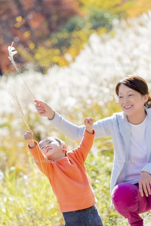 秋のすすき野原で遊ぶ息子と母親の素材 [FYI01075005]