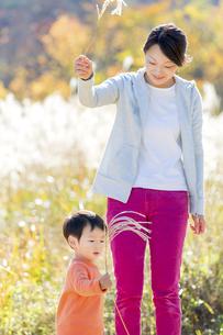 秋のすすき野原で遊ぶ息子と母親の素材 [FYI01075037]
