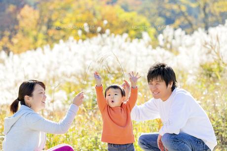 秋のすすき野原で遊ぶ親子の素材 [FYI01075048]