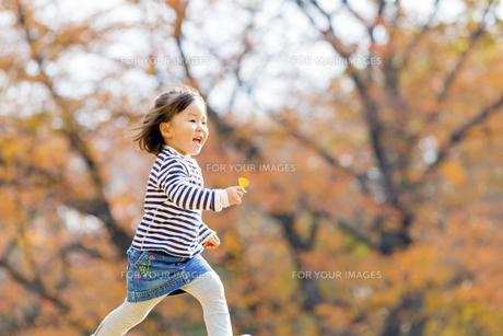 秋の公園を落葉を持って走る女の子の素材 [FYI01075064]