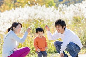 秋のすすき野原で遊ぶ親子の素材 [FYI01075065]