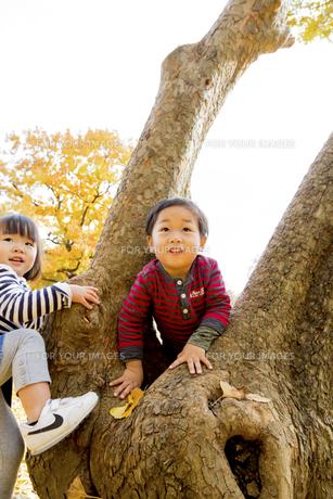 秋の公園で遊ぶ男の子と女の子の素材 [FYI01075080]