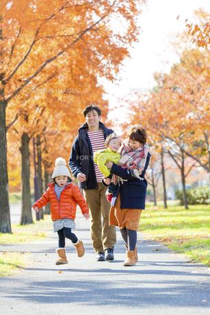 秋の公園を歩く4人家族の素材 [FYI01075104]